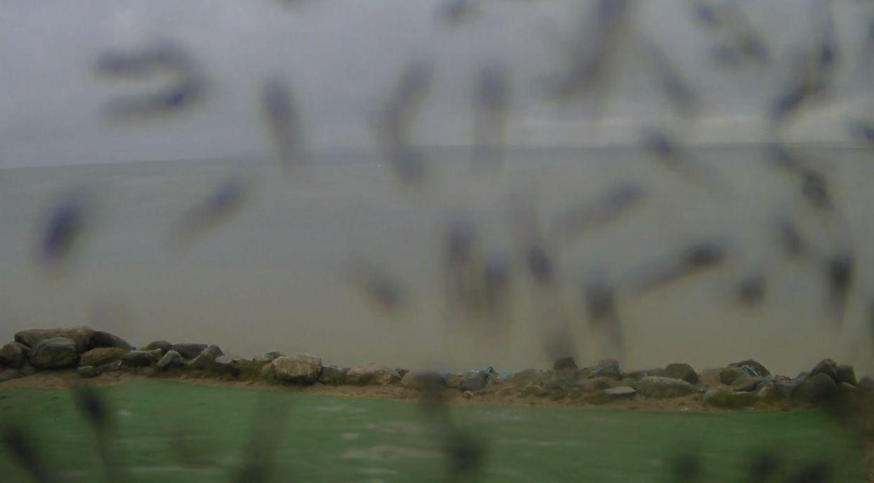 Chałupy, plaża